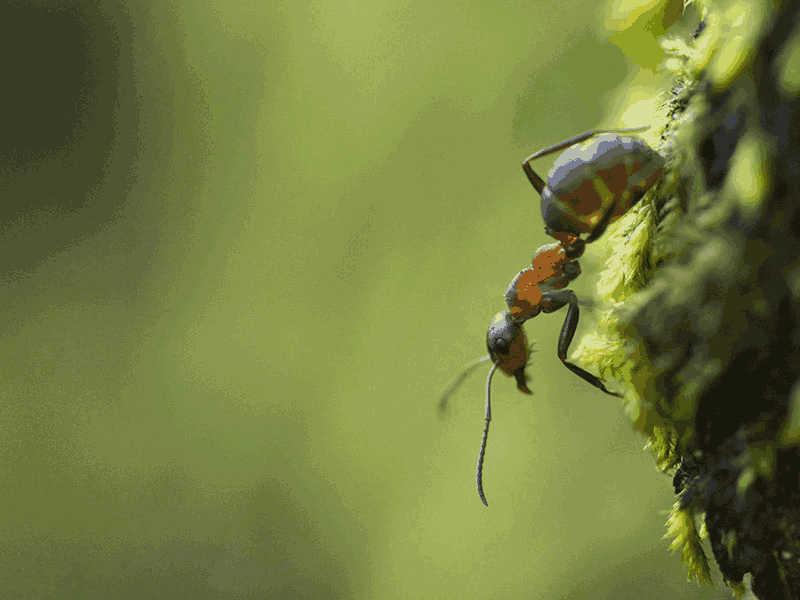 Ant Intelligence