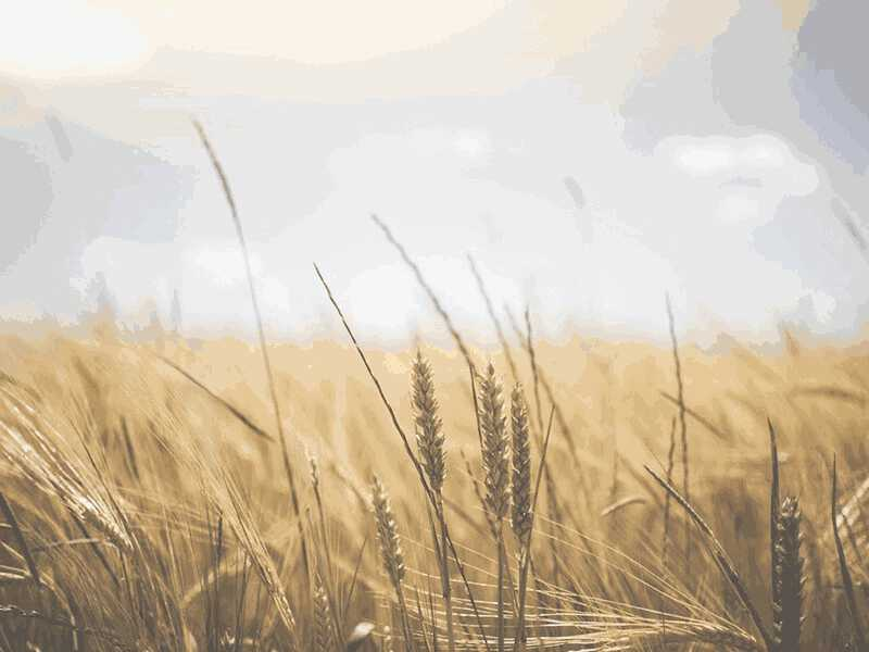 Endless Harvest