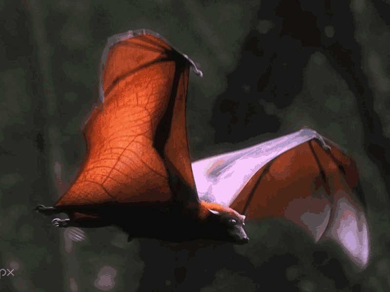 Let's Go Bats