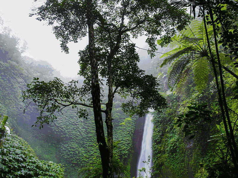 These Misconceptions of Tropical Rainforests