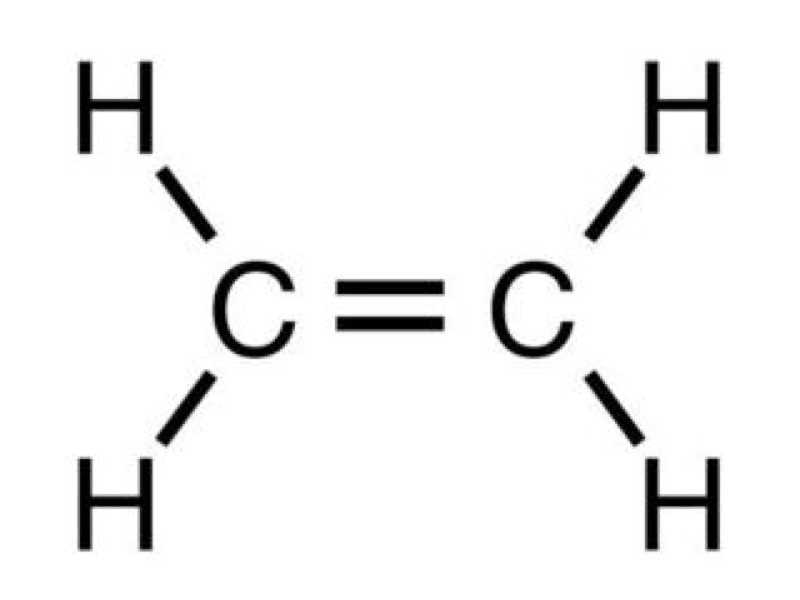 红Delta-Test4听力The Role of Ethylene原文文本答案解析+音频录音mp3【小站托福备考】