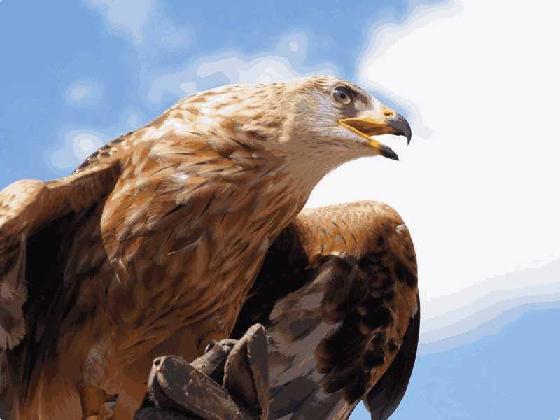 红Delta-Test5听力The Relation Between Bird's Bill and Its Diet原文文本答案解析+音频录音mp3【小站托福备考】