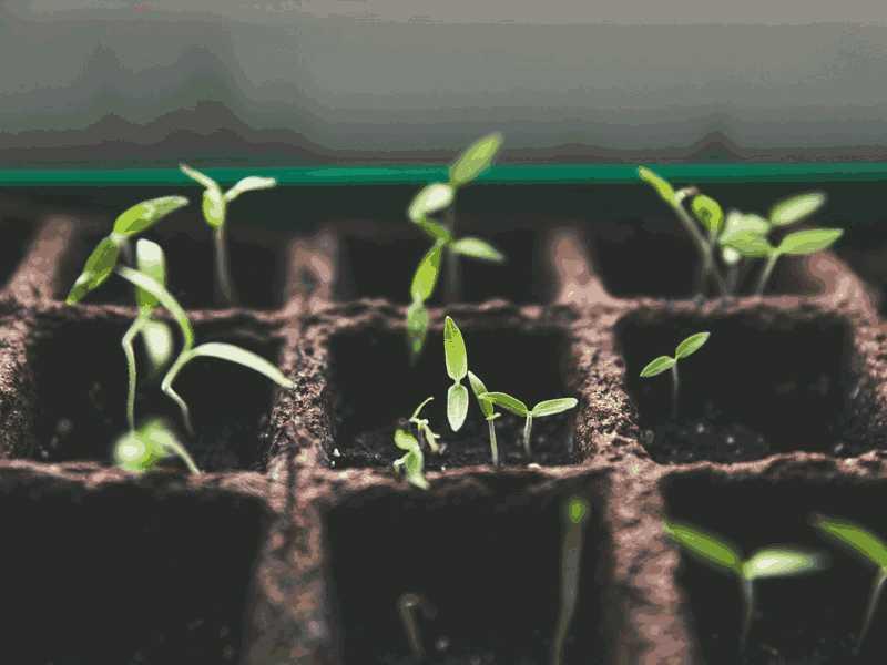 红Delta-Test6听力Germination and Growth of a seed原文文本答案解析+音频录音mp3【小站托福备考】