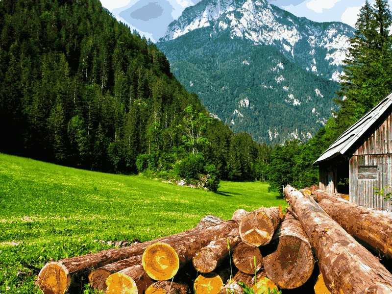 托福红Delta-Test2阅读第2篇Deforestation in North America题目解析