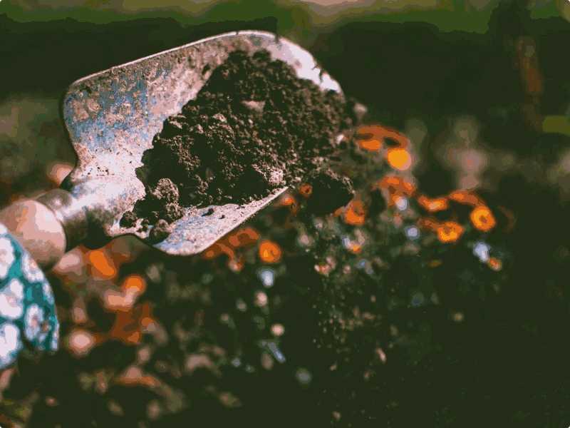 红Delta-Test5阅读Soil Quality难度+答案解析【小站托福备考】